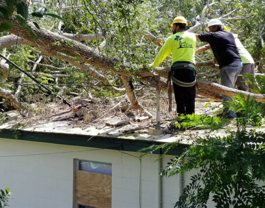 247 Tree Removal-1-Ft Lauderdale Tree Trimming and Tree Removal Services