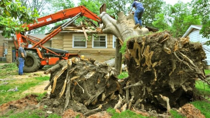 247 Tree Removal-2-Ft Lauderdale Tree Trimming and Tree Removal Services