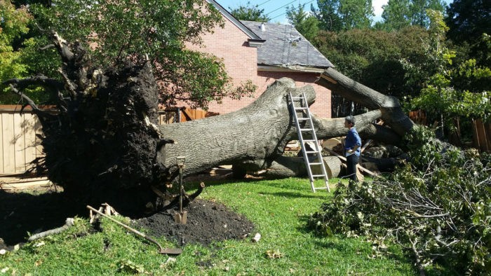 247 Tree Removal-3-Ft Lauderdale Tree Trimming and Tree Removal Services