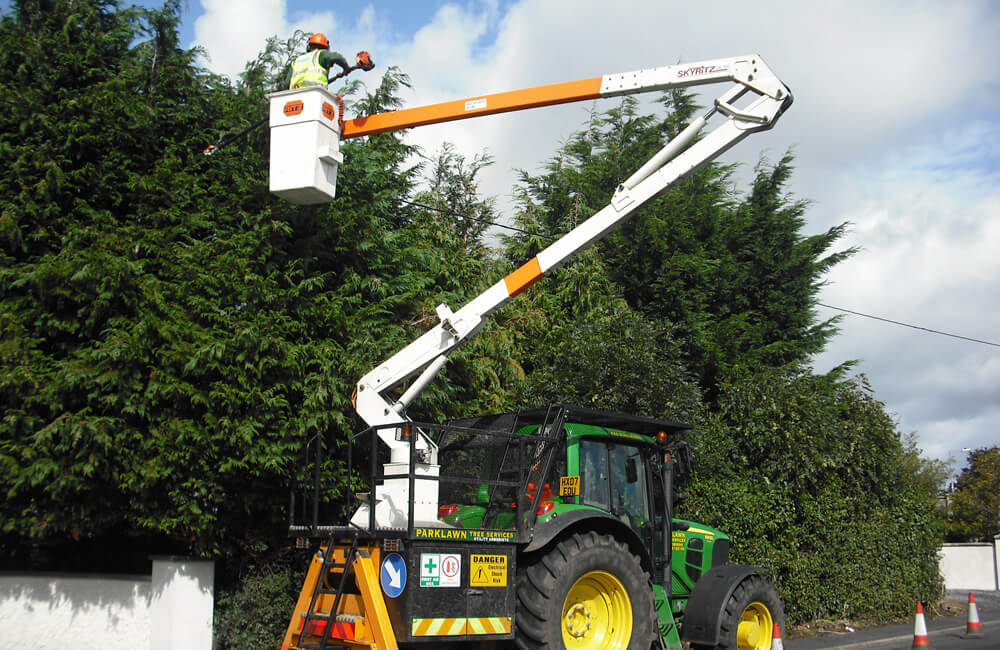 Commercial Tree Services-2-Ft Lauderdale Tree Trimming and Tree Removal Services
