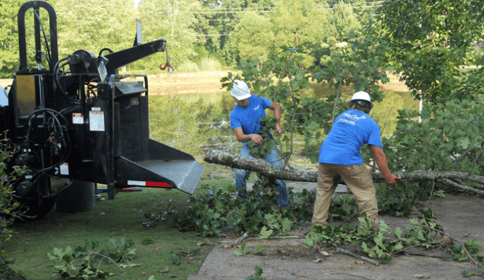 Emergency Tree Removal-1-Ft Lauderdale Tree Trimming and Tree Removal Services