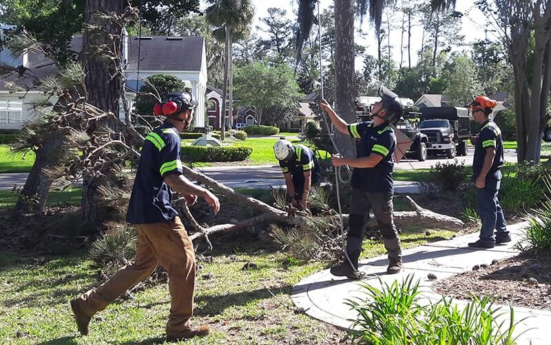 Emergency Tree Removal-2-Ft Lauderdale Tree Trimming and Tree Removal Services
