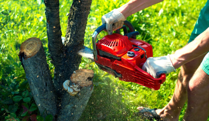 Ft Lauderdale Tree Trimming and Tree Removal Services-1