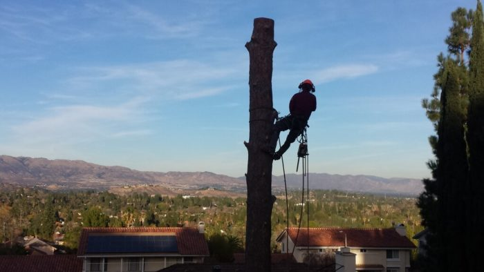 Residential Tree Services-1-Ft Lauderdale Tree Trimming and Tree Removal Services