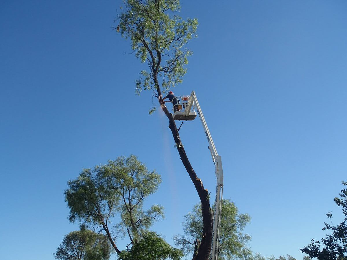 Residential Tree Services-2-Ft Lauderdale Tree Trimming and Tree Removal Services