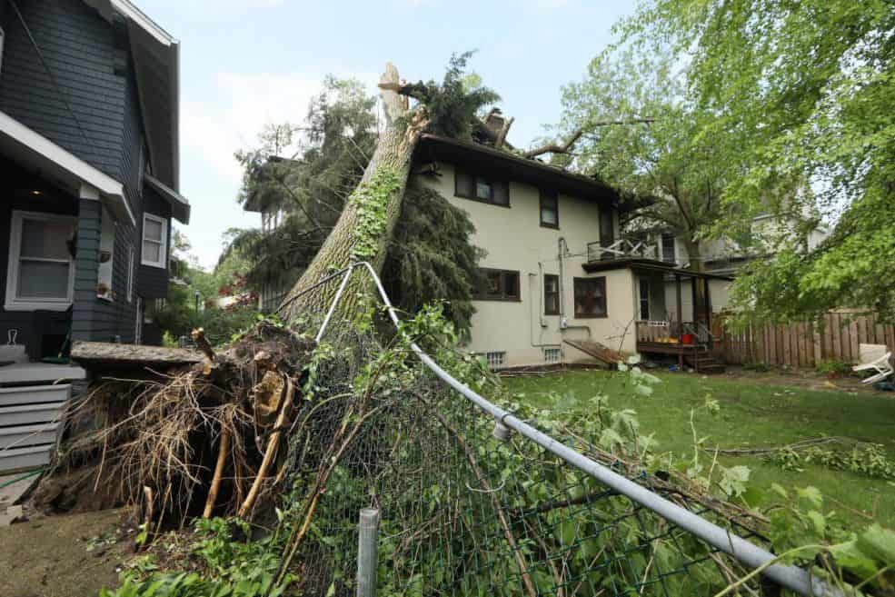 Storm Damage-2-Ft Lauderdale Tree Trimming and Tree Removal Services