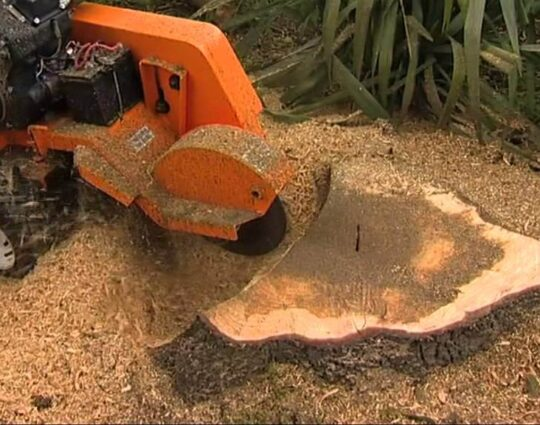 Stump Grinding-1-Ft Lauderdale Tree Trimming and Tree Removal Services