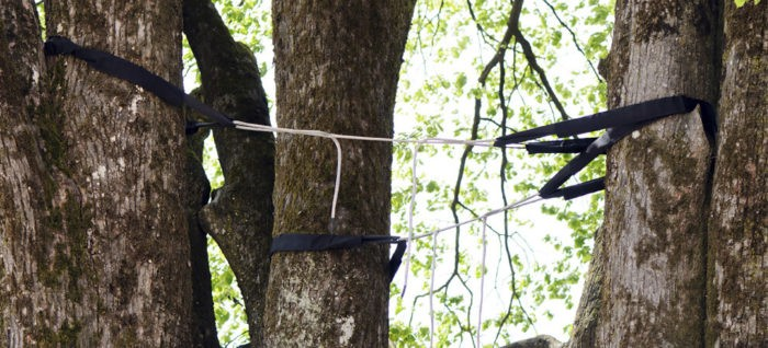 Tree Bracing Cabling-1-Ft Lauderdale Tree Trimming and Tree Removal Services
