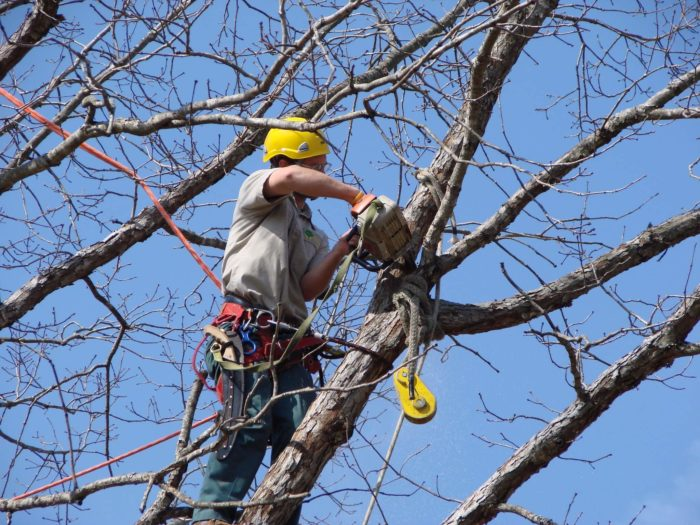 Tree Pruning-1-Ft Lauderdale Tree Trimming and Tree Removal Services