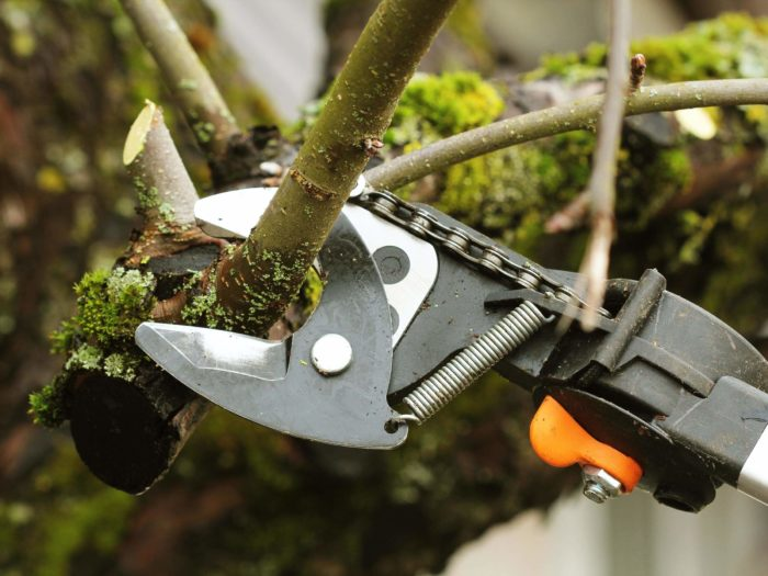 Tree Pruning-2-Ft Lauderdale Tree Trimming and Tree Removal Services
