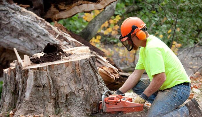 Tree Removal-1-Ft Lauderdale Tree Trimming and Tree Removal Services