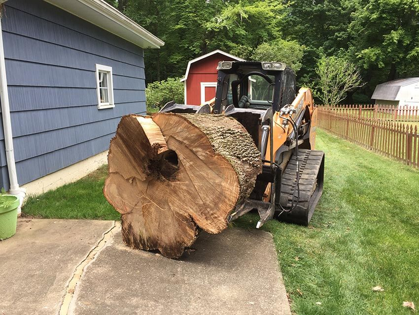 Tree Stump Removal-1-Ft Lauderdale Tree Trimming and Tree Removal Services