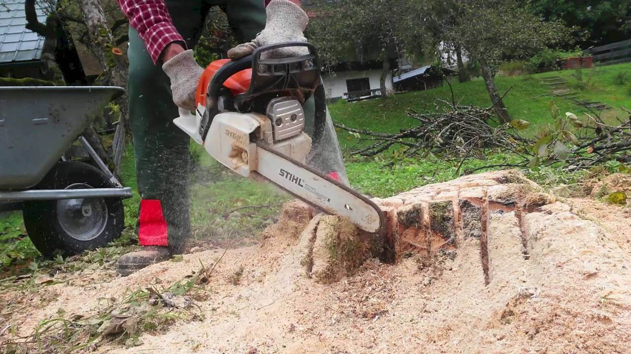 Tree Stump Removal-2-Ft Lauderdale Tree Trimming and Tree Removal Services