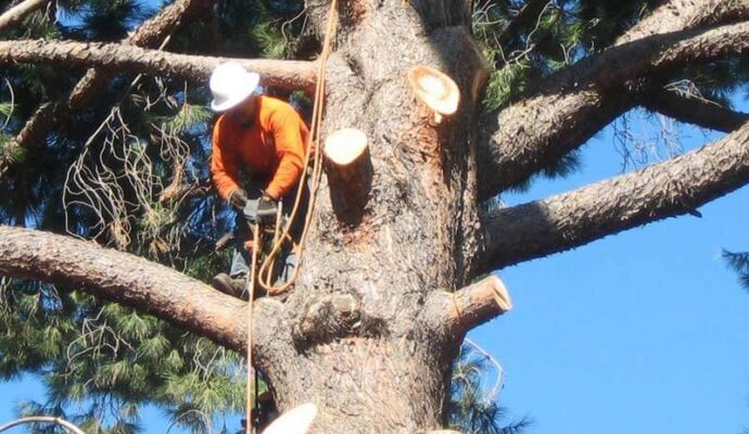 Tree Trimming-1-Ft Lauderdale Tree Trimming and Tree Removal Services